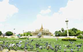Pigeons at a square in front of the Royal Palace, Phnom Penh, Cambodia