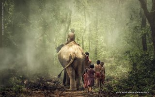 Lifestyfe an elephant and mahout with children traveling on foot