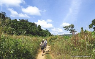 Trekking in Chi Phat village (Cardamom mountain)