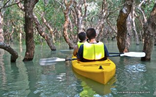 The flooded forest in Siem Reap Cambodia